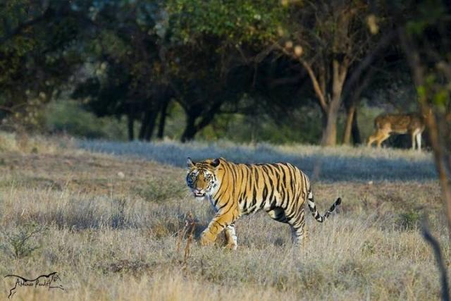 Summer (March-June):  Panna National Park Weather And Best Time To Visit Panna National Park